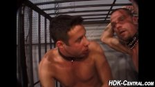Cum swallowing caged stud
